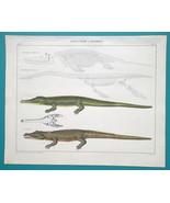 CROCODILE Gavial & Ichthyosaurus Plesiosaurus Skeletons - 1843 HC Color ... - $39.60