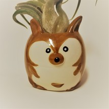 "Kangaroo Pot with Curly Air Plant, Ceramic Animal Planter 2"", Live Tillandsia image 3"
