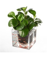 Transparent Flowerpot Self Watering Pot Fish Tank Aquarium Garden Deck P... - $25.23