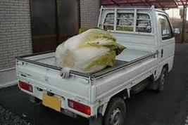 50 Giant Chinese Cabbage Seeds-1085A - $2.98
