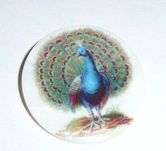 """Wonderful Peacock Bird on Mother of Pearl Button - MOP Button 1-3/8""""s Pe... - $11.39"""