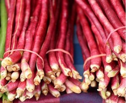 Bean Pole Yard Long Red Noodle Non GMO Heirloom Vegetable Seeds Sow No GMO® - $4.94+