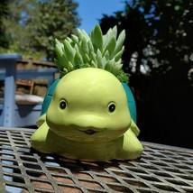 "Turtle Planter & Live Succulent, 5"" Blue Green Ceramic Tortoise Pot, Sedeveria image 6"