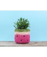 Felt succulent planter / Watermelon vase/bring summer outdoor in/ felted... - $24.00