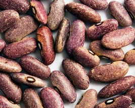 Provence Beans, Organic,originated in Africa, beautiful purple color.100... - $3.42