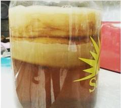 Giant Honey Jun Kombucha Scoby based on strong raw honey and organic gre... - $47.52