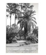 Azalea Garden Winter Park FL Vintage LL Cook Glossy Real Photo Postcard ... - $6.69