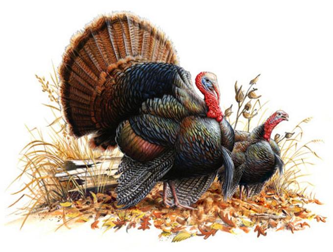 Wild turkey pair cross stitch pattern