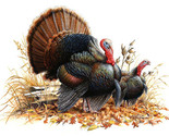 Wild turkey pair cross stitch pattern thumb155 crop