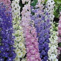 150 Flower Seeds Delphinium Seeds Pennant Bright Bee Mix Lark Spur Garden Seeds  - $47.52