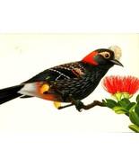 FDC POSTCARD-CRESTED HONEYCREEPER,TROPICAL BIRD SERIES-1998 ARTCRAFT CAC... - $2.94