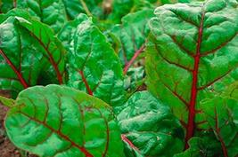 125 Seeds Ruby Red Chard - $13.86