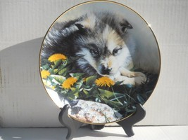 Wolf Pups Collectors Plate Young Faces of the Wilderness Bradford Exchan... - $24.99