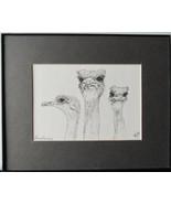 Three Ostrich, Framed Matted Wildlife Art Print, Pen and Ink, Bird Art D... - $30.00