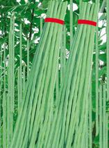25pcs Green Soy Beans Cowpeas Vegetable Seeds,Very Yummy Edible Vegetable IMA1 - $13.99