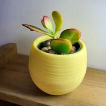 Jade Succulent in Yellow Self-Watering Pot, Live Plant Hummel's Sunset Crassula image 3