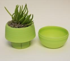 "Senecio Succulent in Green Self-Watering Pot, Live Plant Barberton 3"" Planter image 2"