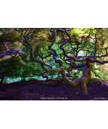 Cylburn Arboretum  - $39.99 - $64.99