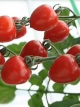 1/8 Oz Seeds of Tomatoberry Tomato - $708.84