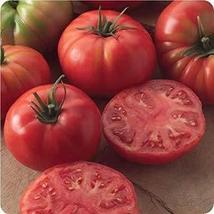 Champion II Hybrid Tomato Seeds (20 Seeds) - $2.79