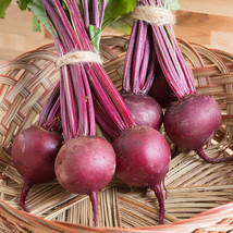 Boro Beet Seed ,Vegetable Seeds,  Ship From US - $15.00
