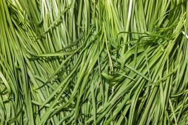 3110mg ORGANIC Garlic Chive Seeds ~ Asian Garden Vegetable ~ Chinese Lee... - $21.99