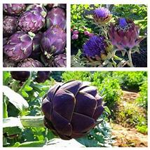 5 Seeds Artichoke Purple Romagna - $28.71