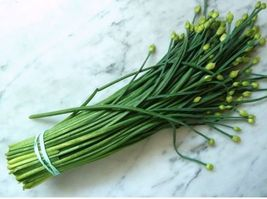 SHIP FROM US 1870 Seeds Chive Herb,DIY Herb Seeds SR - $29.99