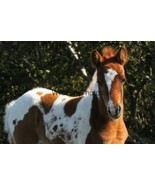Chincoteague Pony Photo- Freckless' 2020 filly - Various Sizes - $7.50+