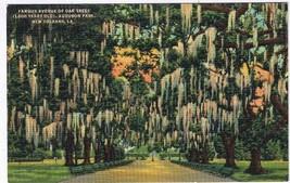 Louisiana Postcard New Orleans Avenue Of Oaks Audubon Park - $2.84