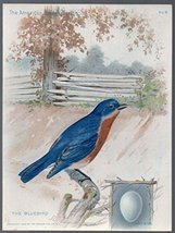 1899 Advertising Tradecard from Singer Sewing Machine Company the Birdbird [Pape - $19.00