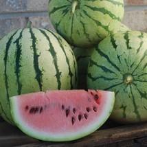 Organic Chris Cross Watermelon Seed - Red Flesh Heirloom Seeds (3.0gr to... - $5.34+