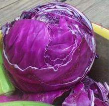 Cabbage Red Acre Non GMO Heirloom Vegetable 40 Seeds by Sow No GMO - $2.47