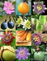 PASSIFLORA mix - PASSION FRUIT exotic edible tropical flower vine seed -15 seeds - $18.00