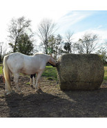 6Ft X 6Ft  Tough 1 Deluxe Round Bale Slow Horse Feed Hay Net U--2-0 - $108.85