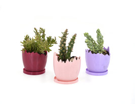 Easter mini planters/Set of three/printed egg cups/Saucer and drainage/egg cups - $41.00