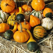 Gourds Seeds - Small Mix  -Yard, Garden & Outdoor Living - Free Shipping - $31.99+