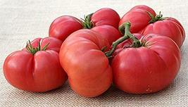 New Big Dwarf Tomato Seeds (40 Seed Pack) - $3.91
