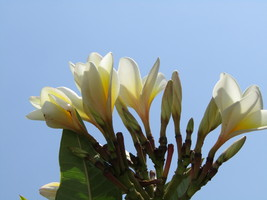 Flowers,Digital download, Photography,Garden decor,Art,Crafts,Background... - $5.00