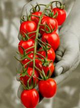 15 Strawberry Tomato Seeds-1097A - $2.98