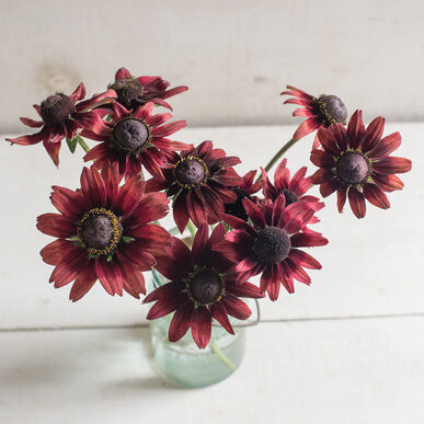 Primary image for Cherry Brandy Rudbeckia Seed, Rudbeckia Flower Seed
