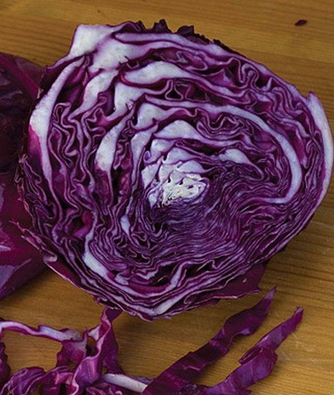 USA Seller 100 MAMMOTH RED ROCK CABBAGE SEED ~ HEIRLOOM NON GMO FALL STORAGE!