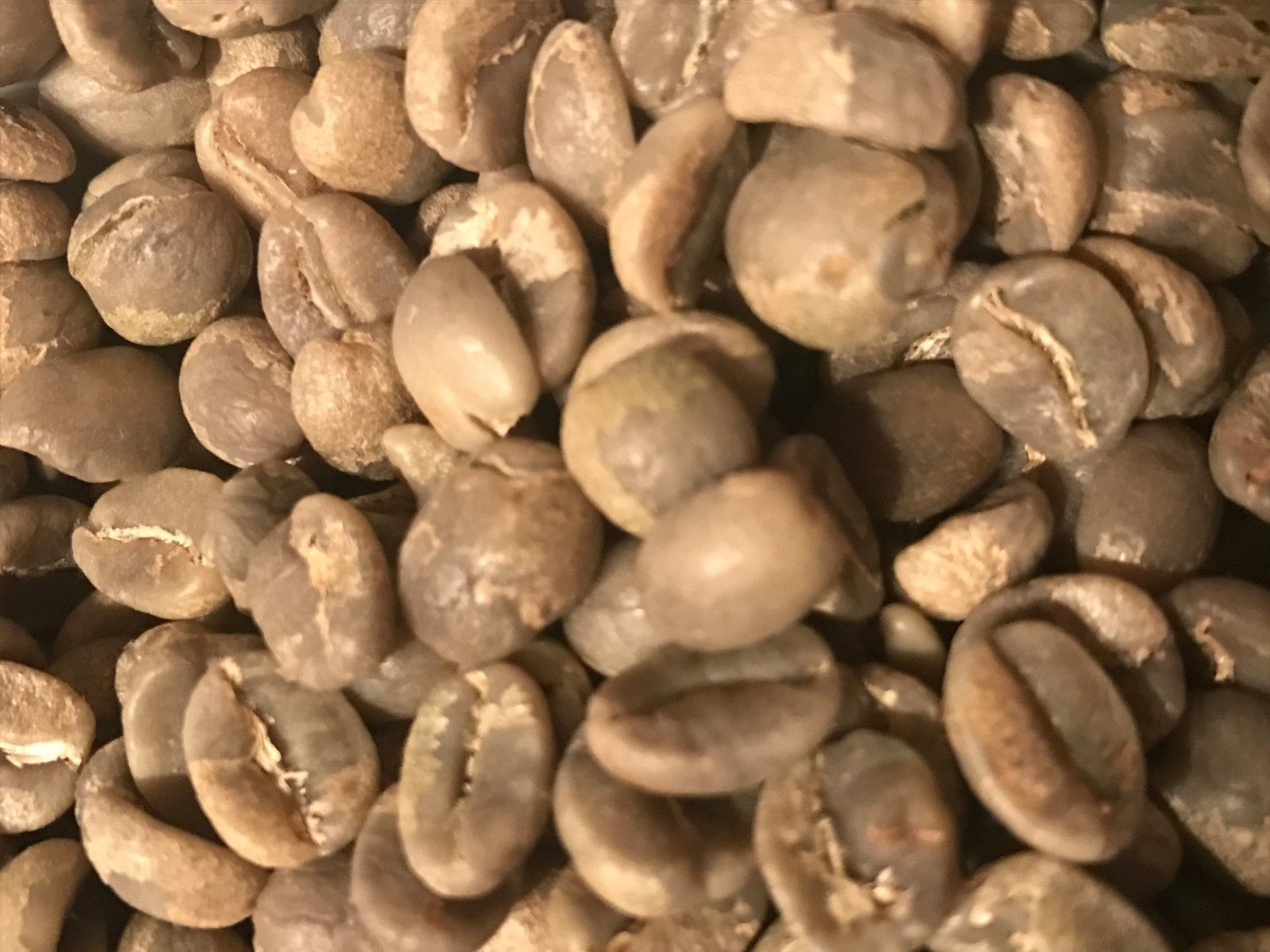 Used, green coffee beans 10 pounds Zambia AA/AAA. SALE!! for sale  USA