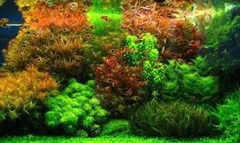 Aquarium Grass Seed Plants Flower Pots Planters Home Garden mixed 200 se... - $2.16