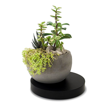 Succulent Cactus Concrete Planter Pot with Wooden Base Decorative Air Pl... - €24,66 EUR