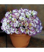 SHIP FROM USA Lisianthus Sapphire Mix Flower Seeds (Eustoma Grandiflorum... - $38.21