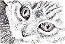 "Akimova: CAT, ink, black&white, 6""x 8.5"" - $15.00"