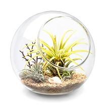 Mkono Plant Terrarium Display Glass Tabletop Succulent Air Plant Planter... - $30.99