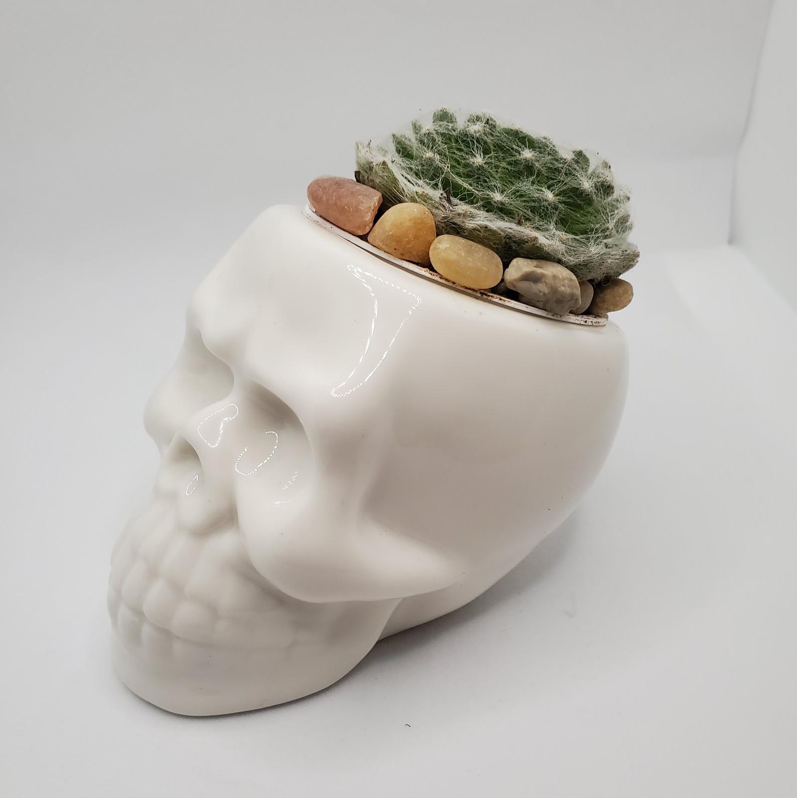Skull cobwebhenchick 1