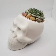 "Sempervivum Succulent in Ceramic Skull Planter 3.5"", Hens & Chicks Live Plant"